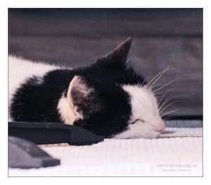 schwarz weisse Katze, Name:  Scottie, schläft unter dem Tisch