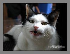 Scottie zeigt Zähne